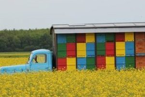 bees-pasture-2291125_640