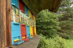 Colorful Apiary in Slovenia with flying bees