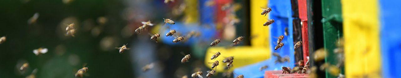 Swarm of bees flying around beehive during spring season